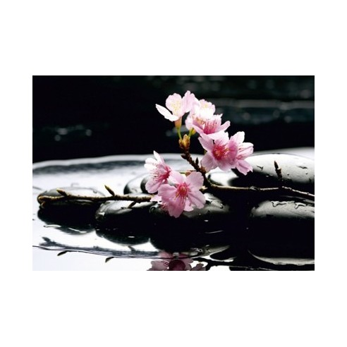 Fototapet - floare (360x254cm)
