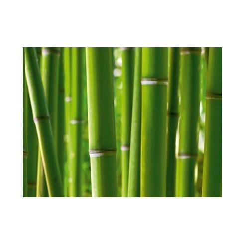 Fototapet - Bambus (360x254cm)