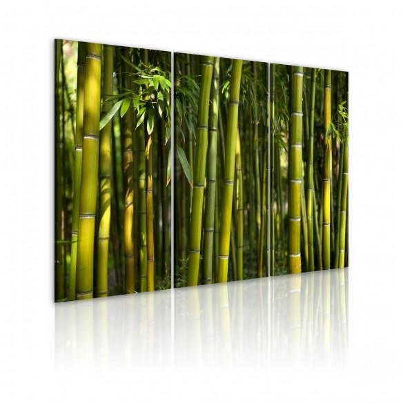 Tablou  Green bamboo