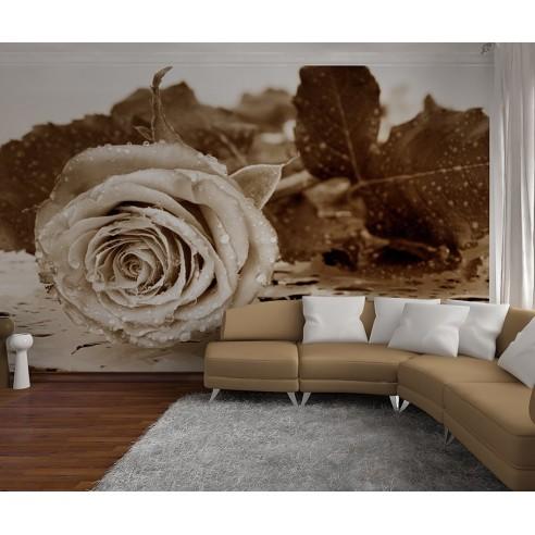 Fototapet cu Trandafir Alb Negru