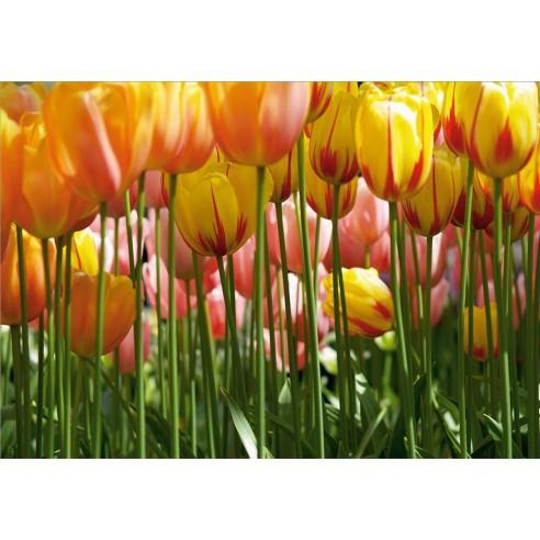 Fototapet Tulip Big
