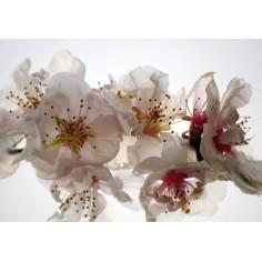 Fototapet - Orhidee albe...