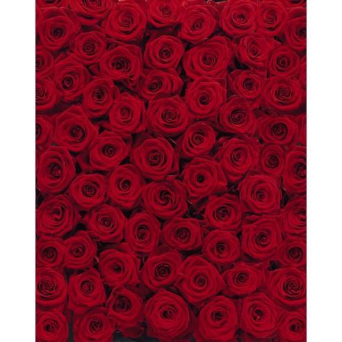 Fototapet Komar Roses (194 x 270 cm)
