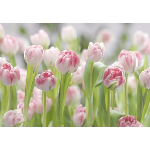 Fototapet Komar Secret Garden (368 x...