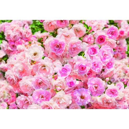 Fototapet Komar Rosa (368 x 254 cm)