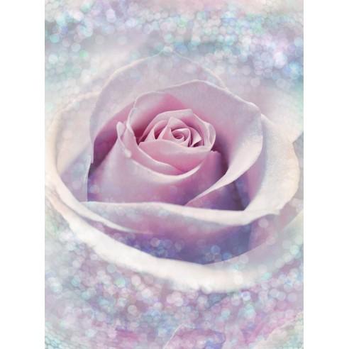 Fototapet Komar Delicate Rose (184 x...