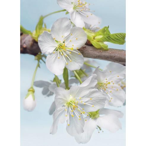 Fototapet Komar Blossom (184 x 248 cm)
