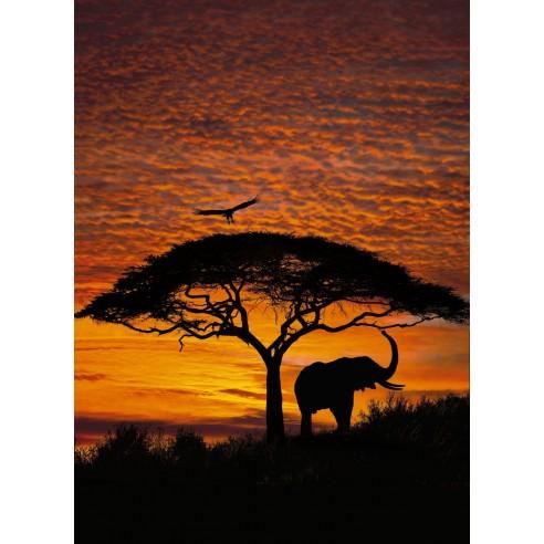 Fototapet National Geografic African...