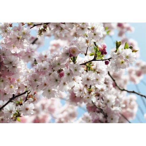 Fototapet National Geografic Spring...
