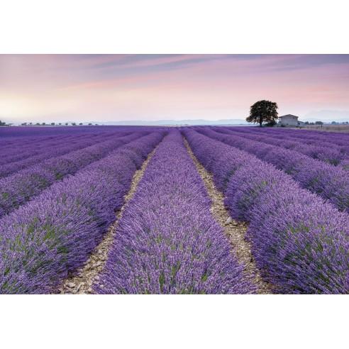 Fototapet Komar  Provence (368 x 248 cm)