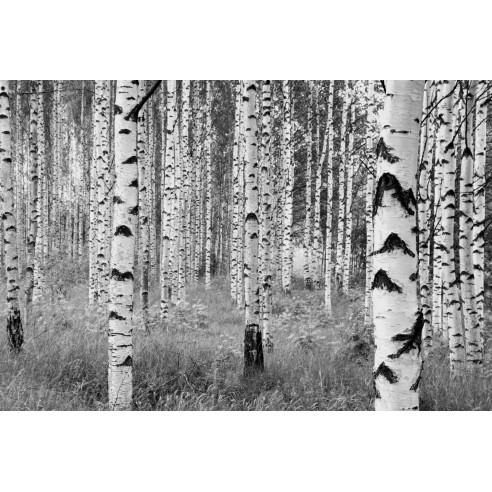 Fototapet Komar Woods (368 x 248 cm)