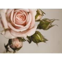 Fototapet Trandafir Roz -...