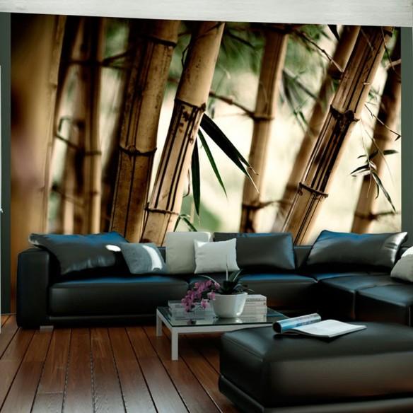 Fototapet  Fog and bamboo forest